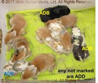 adb-add-ade-2017-04-17_17-24-00_wm.jpg